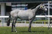 編號27、出自父系Dark Angel的閹馬,購自雅康納多維爾週歲馬拍賣會。