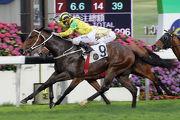 出自2012年香港國際馬匹拍賣會的「牛精好友」合共在港贏得七場頭馬,包括曾在第二班的賽事取勝。