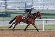 騎師貝湯美今晨策其杜拜金莎軒錦標坐騎「新力風」,於美丹馬場進行操練。