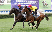 兩匹南半球三歲馬,包括編號23 (父系Smart Missile,母系Eyelean)及編號7 (父系More Than Ready,母系Zingaling) 的拍賣馬今早在沙田結伴試跑。