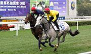 出自父系Dark Angel的編號15拍賣馬,在今早的試跑中稍微領先另一匹同來自北半球的三歲馬、編號24 的Holy Roman Emperor子嗣。