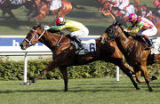 Chris So��s Bravo Watchman (No.6) notches his third career win from as many starts under Joao Moreira in the Class 3 Sha Tin Hoi Handicap (1200m).