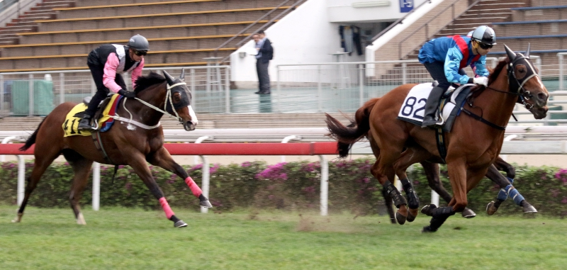 Rapper Dragon (in blue) and Beauty Only (in pink) finish 10th and 12th respectively in today's trial.
