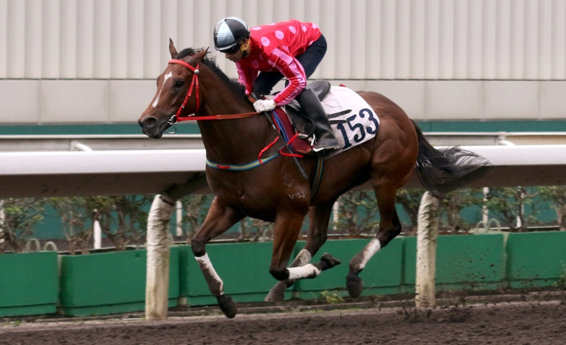 Mr Stunning runs second in a 1050m barrier trial at Sha Tin this morning.