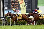 香港代表「醒目名駒」(2號馬)勝出今日於澳門仔馬場舉行的澳港盃。