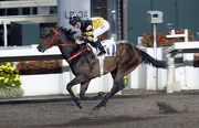 D B Pin scores his fifth win of the season in a Class 2 1200m handicap on Sha Tin��s All-Weather Track on 5 April.