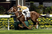 Winner��s Way makes all under Zac Purton in a Class 2 1650m handicap at Happy Valley.