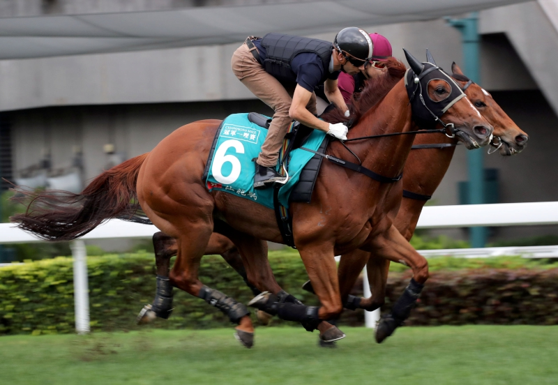 Rapper Dragon gallops on the turf track this morning with Joao Moreira on board.