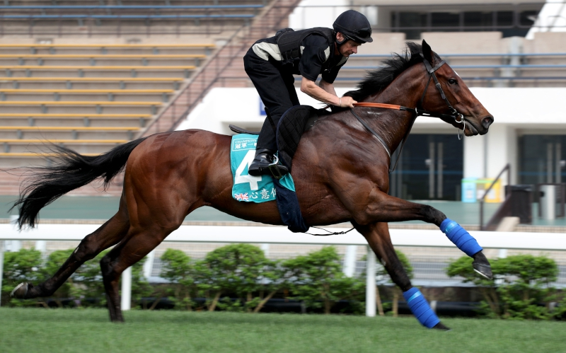 Convey exercises on the Sha Tin turf track today.