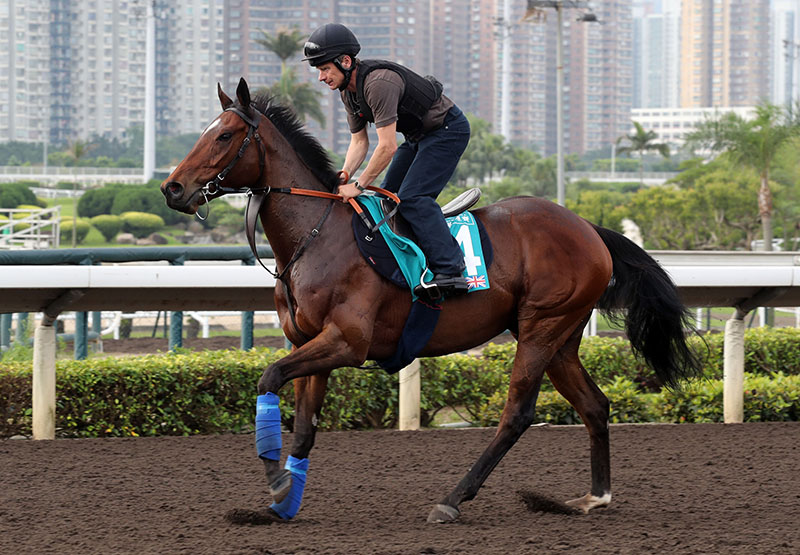 Convey  exercises at Sha Tin this morning.