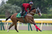 Beauty Only has a serious gallop on the Tokyo turf this morning.