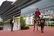 Tony Cruz inspects Beauty Only during trackwork.