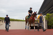 John Size with Contentment at Tokyo racecourse.