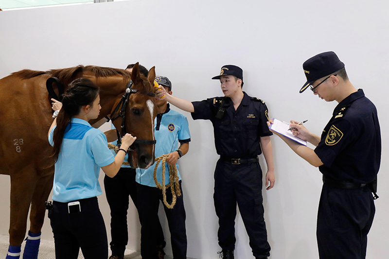 The first shipment of 14 retired horses, belonging to the Racing Development Board Stable, arrived at Conghua Training Centre on Tuesday morning. They are the first horses to be stabled at Conghua Training Centre.
