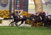 Photo 1、2: John Size-trained Sight Winner (No. 1) takes the ATV Cup (Class 1 - 1600m) in Race 7.